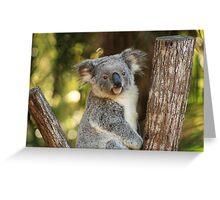 Portrait of a Koala Greeting Card