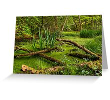 Back into the Wilderness Greeting Card