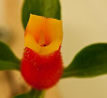Candy Corn Flower Macro by Sandra Foster