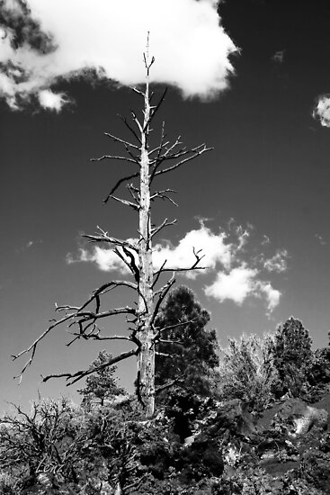 Bare Tree by George Lenz