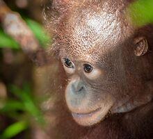 Young Orphan Orangutan  by Orangutans