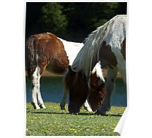 Grazing Horses (12) Poster