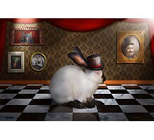 Animal - The Rabbit Photographic Print