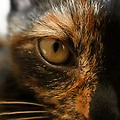 Cat's Eye by m4rtys