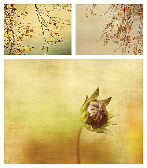 Seasons by Anne Staub