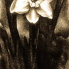 Antique Daffodil by onyonet photo studios