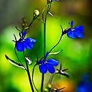 Blue Flowers-Anime Abstract by onyonet photo studios