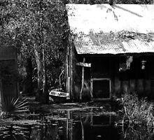 Louisiana Swamp by cmgable