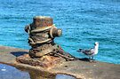 Seagull at Potter's Cay in Nassau, The Bahamas by 242Digital