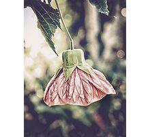 chinese lantern Photographic Print