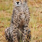 Cheetah Cub by Roger  Mackertich
