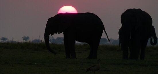 elephants at sunset by supergold