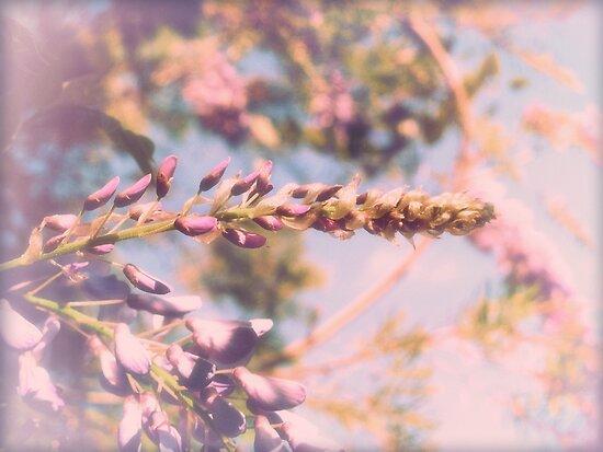 wistful wisteria by © Karin  Taylor