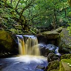 Padley Gorge II by John Dunbar