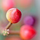 Berries in my garden... (2.0...) by Bob Daalder