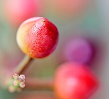 Berries in my garden... (2.0...) by Bob Daalder