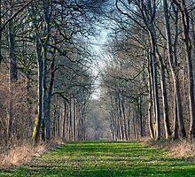 Badminton Woods by JPassmore