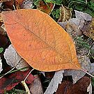 Autumn's Ground Cover by Monnie Ryan