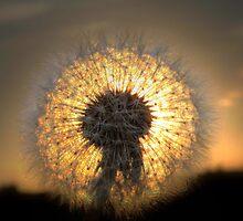 Dandelion fireball  by larry flewers