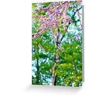 Beautiful Blossoms, Spring Photography Greeting Card
