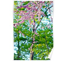 Beautiful Blossoms, Spring Photography Poster