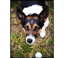 Jessie the Jack Russell Terrier: It's All About the Ball Photographic Print