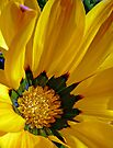 Flower 05 by DarthIndy