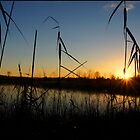 A Swamp sillhouette sunrise by mashdown