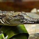 Crocodile by Vicki73