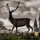 Seasons of Scotland by fraser68