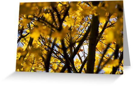Turning Leaves, Emberton, UK by strangelight