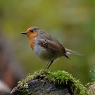 Robin by Peter Wiggerman