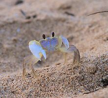 A Crab's Life by Citisurfer