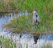 Great Blue Heron - Mirror Image by Maria Martinez
