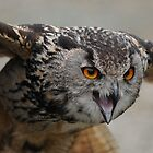 European Eagle Owl 'Huey' by Simone Kelly