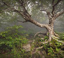 Craggy Gardens Blue Ridge Parkway Asheville NC - Enduring Craggy by Dave Allen