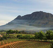 Stellenbosch skyline by Explorations Africa Dan MacKenzie
