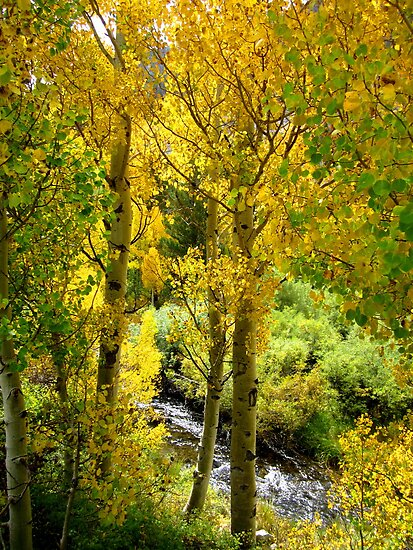 Bishop Creek by marilyn diaz