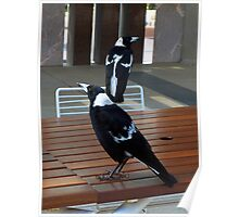 Black Backed Magpies - Parliament House, Canberra  Poster