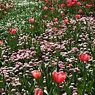 The Flowers of Floriade 2012 - Canberra, Australia by Bev Pascoe