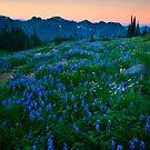 Tatoosh Sunrise by DawsonImages