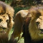 Lions by Crystal Potter