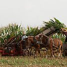 Harvest Time in Lancaster County by Mark Van Scyoc