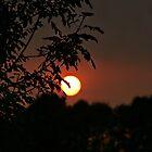 Fire Sun by AngieBanta