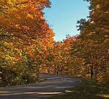 A Country Road lined with Yellow Leaved Trees by Chantal PhotoPix