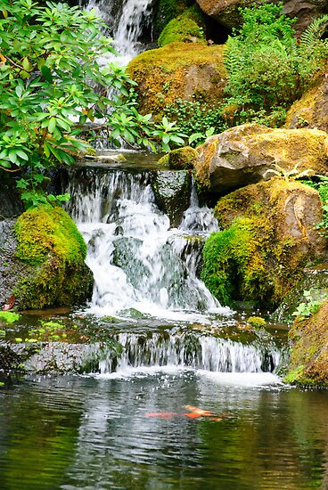 Coy Pond Waterfall By Diego Re Redbubble