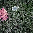 The leaves on the grass by Zlomorda
