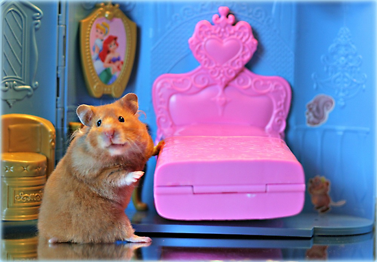 """""""And, This Bed Is Just Right...."""" by AngieBanta"""