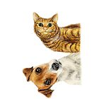 cat and dog by laurina