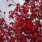 Fire Bush Gray Sky by Karen Jayne Yousse